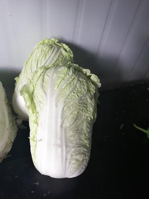 吉林省长春市南关区卷心包菜 4~5斤