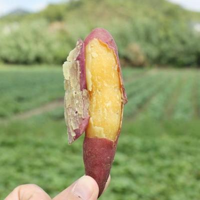 陕西省西安市临潼区板栗红薯 2-5两