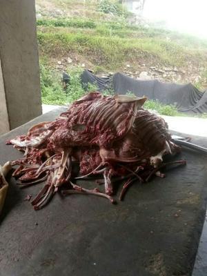 广东省深圳市宝安区羊肉类 生肉