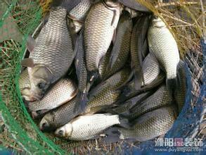 上海青浦区花白鲢 人工养殖 0.25-1公斤