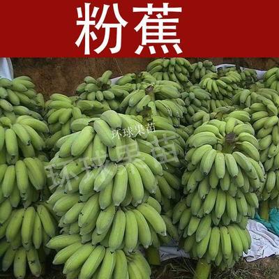 广西壮族自治区钦州市灵山县矮粉一号苗