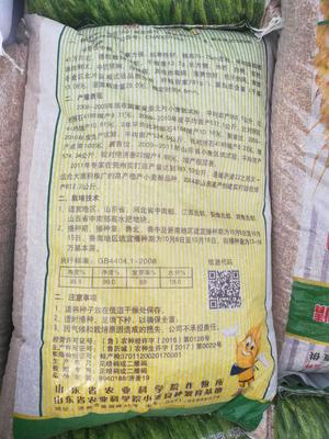 河北省邢台市南和县小麦种子