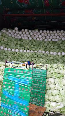 北京丰台区小娃娃菜 10两以上