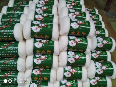 宁夏回族自治区银川市贺兰县新疆棉花