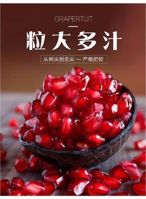突尼斯软籽石榴 0.6 - 0.8斤