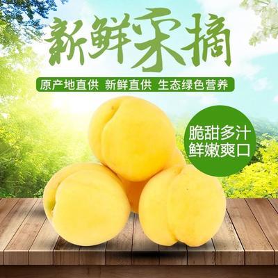 陕西省宝鸡市岐山县黄金蜜3号黄桃 60mm以上 4两以上