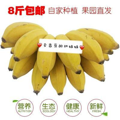 广西壮族自治区南宁市西乡塘区西贡蕉 七成熟 40斤以下