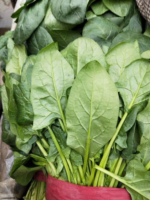 大叶菠菜 25~30cm图片