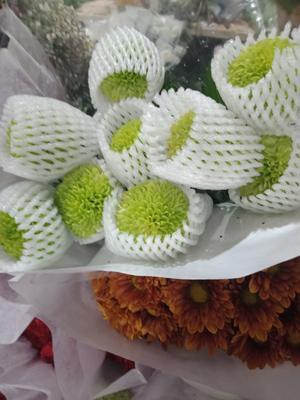 云南省昆明市呈贡区绣球玫瑰