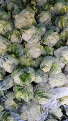 山东省泰安市肥城市有机花菜 适中 3~4斤 乳白色