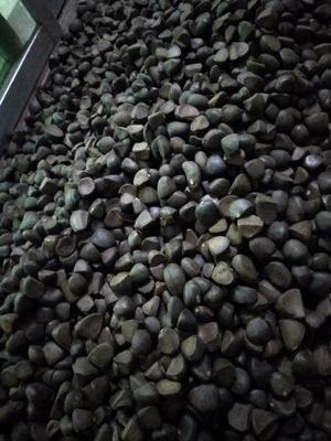 湖南省郴州市资兴市油茶籽