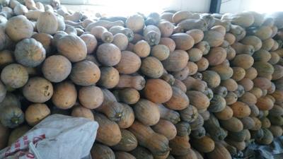 重庆黔江区金韩蜜本南瓜 10~15斤 长条形
