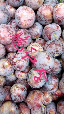 四川省阿坝藏族羌族自治州汶川县脆红李 20 - 25mm