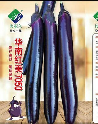 河南省周口市扶沟县茄子种子