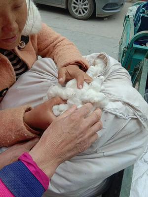 新疆维吾尔自治区新疆维吾尔自治区图木舒克市新疆棉花