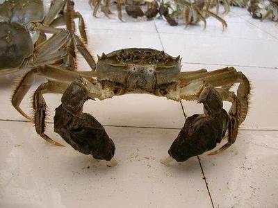 盐城生态大闸蟹 3.0-3.5两 公蟹