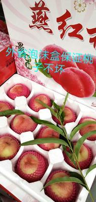 辽宁省丹东市宽甸满族自治县燕红桃 80mm以上 5两以上
