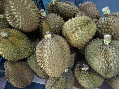 广西壮族自治区崇左市凭祥市金枕头榴莲 60 - 70%以上 4 - 5公斤