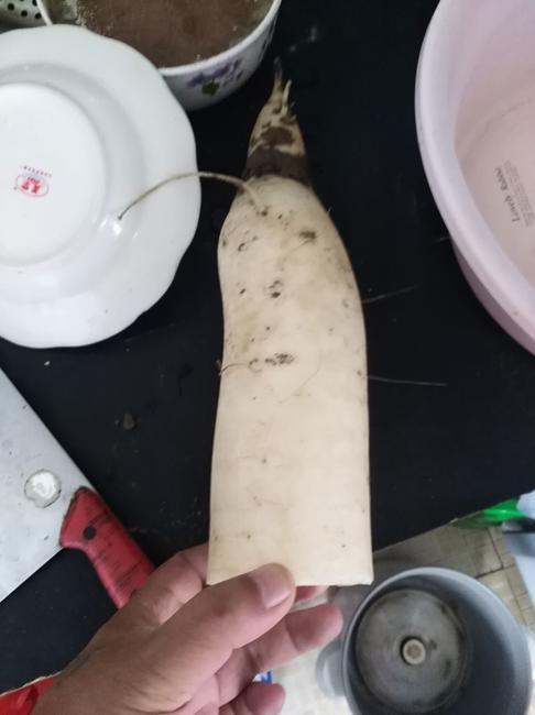 白萝卜 4斤以上
