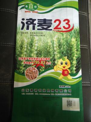 山东省济南市历城区小麦种子 ≥95% ≥96% ≥98% 杂交种 ≤7%
