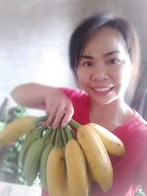 广西壮族自治区南宁市西乡塘区牛角蕉 七成熟 60 - 70斤