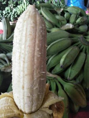 广西壮族自治区南宁市西乡塘区芭蕉 七成熟 40斤以下