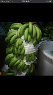 云南省文山壮族苗族自治州麻栗坡县缅甸香蕉 七成熟 40斤以下