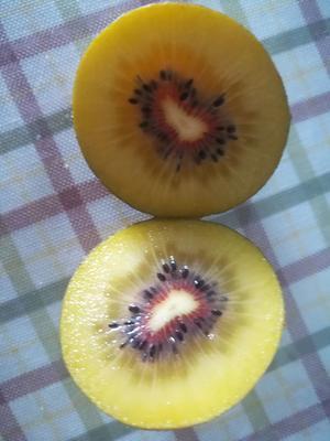 这是一张关于红阳猕猴桃 90~100克的产品图片