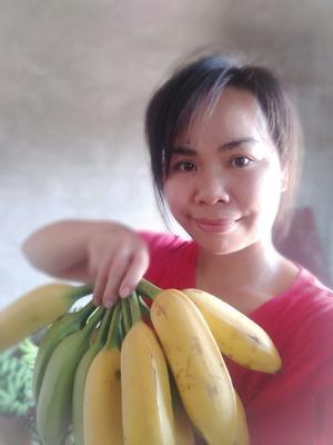 广西壮族自治区南宁市西乡塘区土芭蕉 七成熟 60 - 70斤