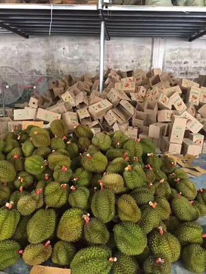 广西壮族自治区南宁市江南区金枕头榴莲 90%以上 2 - 3公斤