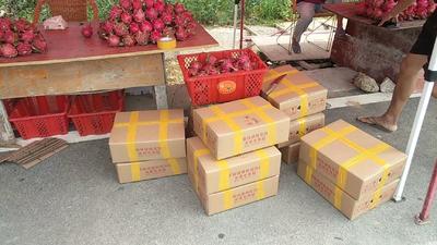贵州省黔南布依族苗族自治州罗甸县红皮红肉火龙果 大(7两以上)