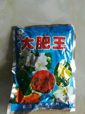 江苏省宿迁市沭阳县大肥菇菌种