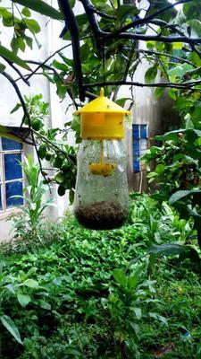 广西壮族自治区来宾市兴宾区灭虫灯