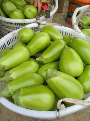 湖北省随州市曾都区青茄 5两以上