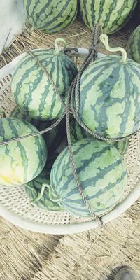 江苏省盐城市东台市美都西瓜 有籽 1茬 9成熟 6斤打底