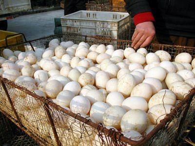 河南省郑州市管城回族区白鸭蛋 食用 箱装