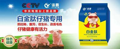河南省郑州市金水区仔猪浓缩料