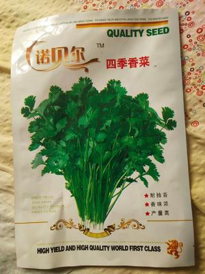山东省潍坊市昌邑市香菜种子