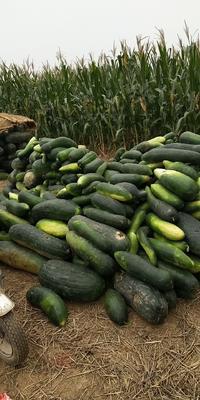 河北省邢台市隆尧县地冬瓜 0.8~1.2斤 黑皮