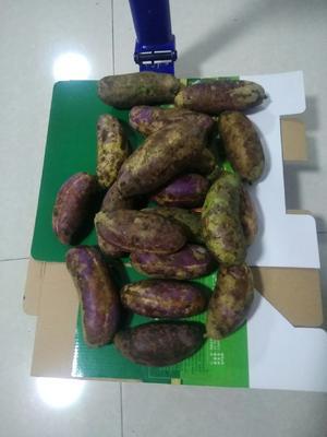 河北省保定市安新县紫色一号八月瓜 种植 150g以上