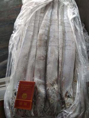 山东省日照市东港区舟山带鱼 野生 0.5公斤以下