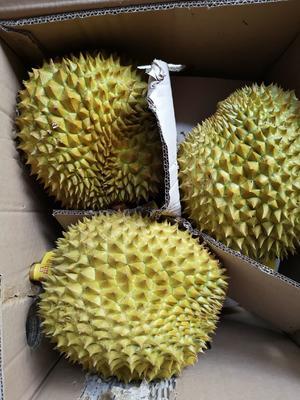 广西壮族自治区崇左市凭祥市泰国金枕榴莲 60 - 70%以上 2 - 3公斤