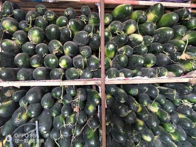 新疆维吾尔自治区塔城地区沙湾县黑皮冬瓜 10斤以上 黑皮