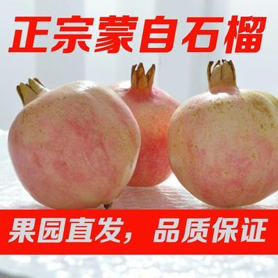 河北省石家庄市无极县蒙自石榴 0.3 - 0.5斤