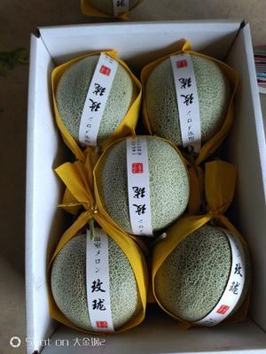 这是一张关于网纹瓜 2斤以上的产品图片