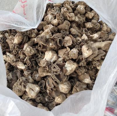 新疆维吾尔自治区喀什地区岳普湖县干红蘑菇 散装 1年