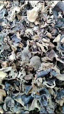 广东省梅州市平远县桐树种植干木耳 1年以上