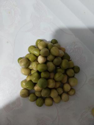 云南省楚雄彝族自治州双柏县青豌豆 5-7cm 饱满