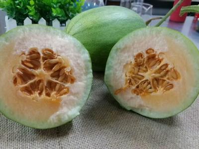 云南省昆明市呈贡区玉兰香蜜瓜 1斤以上