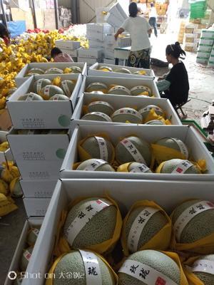 这是一张关于网纹瓜 2斤以上 的产品图片